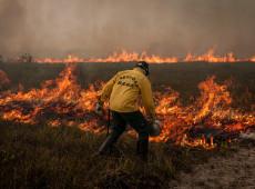 Área devastada da Amazônia nunca será capaz de recuperar bioma original, diz pesquisador