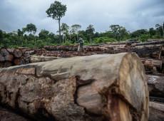 Mais de 600 cientistas de notoriedade internacional criticam política ambiental de Bolsonaro