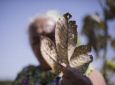 Em MT, fazendeiros usam veneno como arma química para expulsar assentados e indígenas