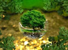 Ao menos 13 milhões de árvores foram derrubadas ilegalmente no Xingu em dois meses