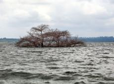 Índios do Xingu forçados a trocar a pesca pela agricultura