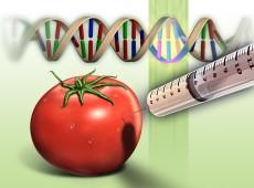 Agrotóxicos e câncer