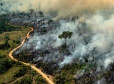 """Amazônia em chamas: """"A cobra está comendo o próprio rabo"""", diz pesquisador da USP"""