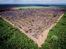 """""""Extinguir de vez o desmatamento ilegal e legal é, por fim, um imperativo ético"""""""