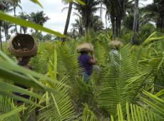 Queimadas no Cerrado, segundo maior bioma do Brasil, seguem sendo ignoradas