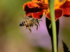 Como eu descobri que ao matar as abelhas também estávamos matando nossas frutas