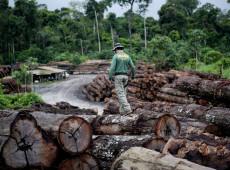 Queimadas: ou as vacas de Bolsonaro na Amazônia ou as uvas dos vinicultores gaúchos
